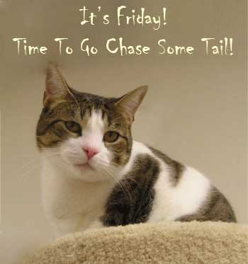 It's Friday, time to go chase some tail